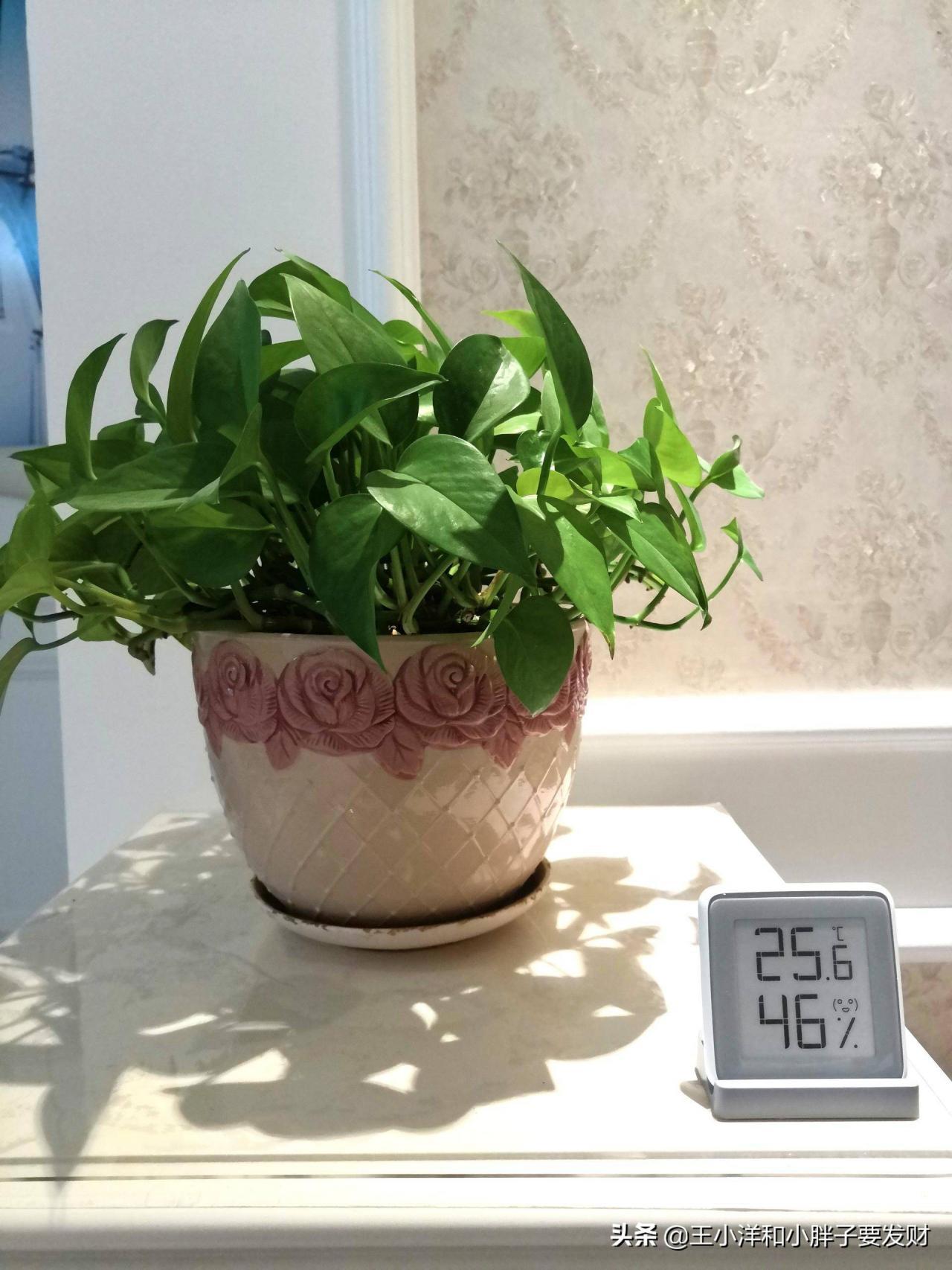 温度计使用评测(温湿度计使用方法)
