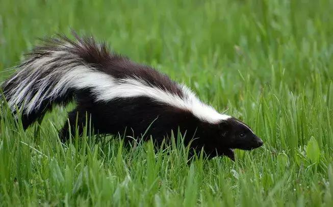 冬眠动物有哪些动物(冬天需要冬眠的动物大全)