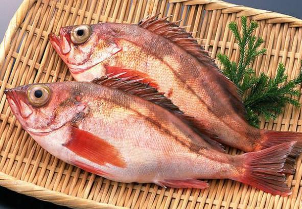 红鲷鱼多少钱一斤(红鲷鱼的市场价格)