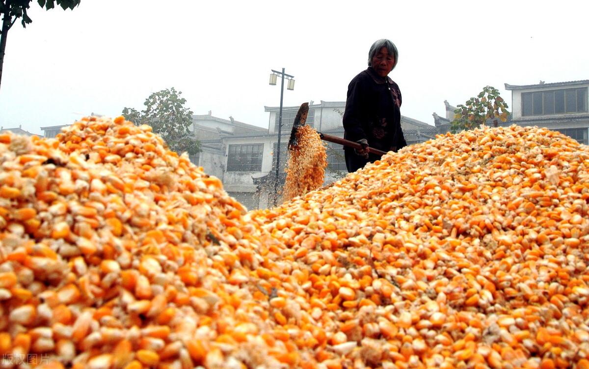 小型玉米深加工项目(4个玉米深加工小本投资好项目)