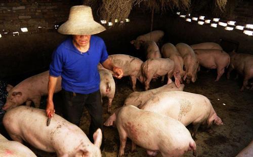 农民创业(有五个稀缺的创业方向)
